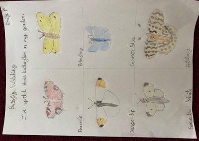 Emily P Butterflies